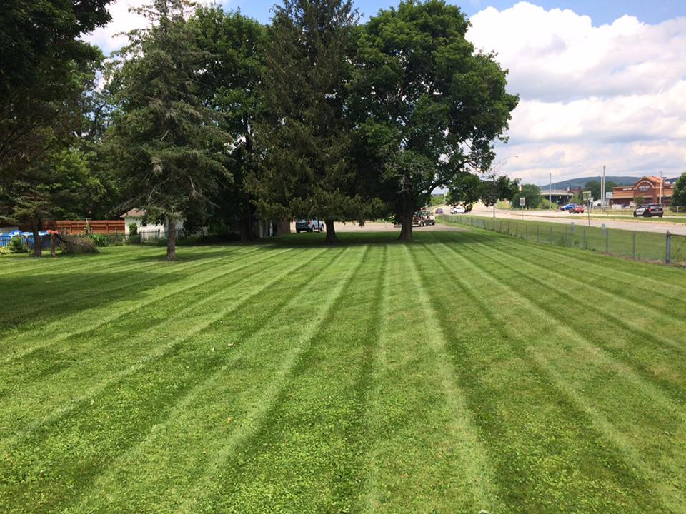 Just mowed lawn in Hornell NY