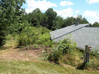 Brush and weed clearing-before, Alfred, NY