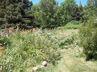 Overgrown sidehill-before, Alfred, NY