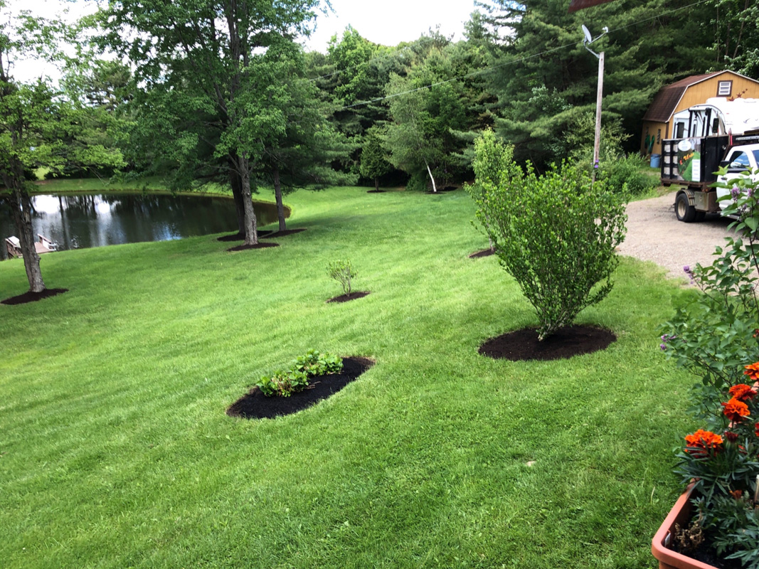 Pond with trees after edging and mulching