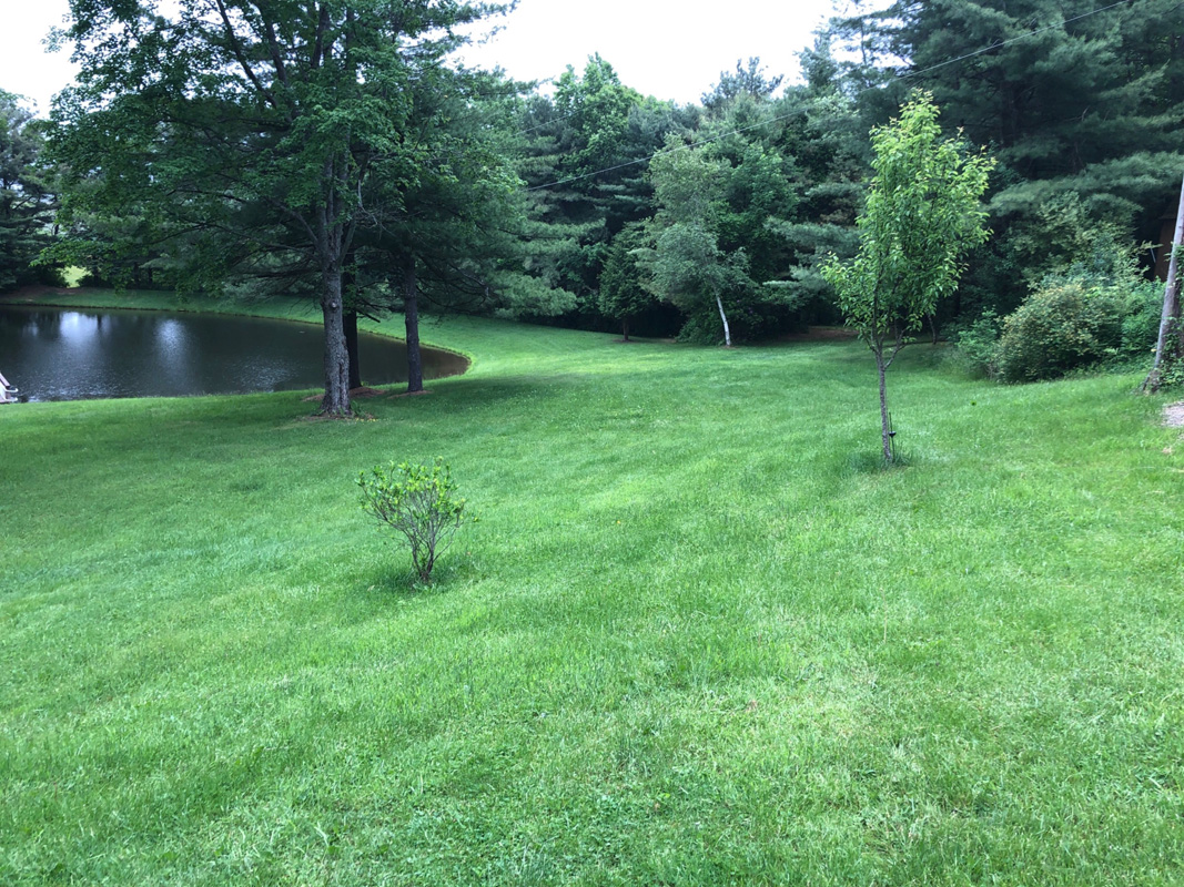 Pond with trees before edging and mulching